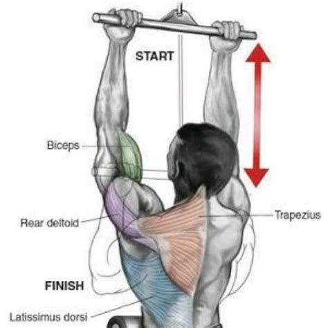 Closed Grip Underhand Pull Ups - Exercise How-to - Workout