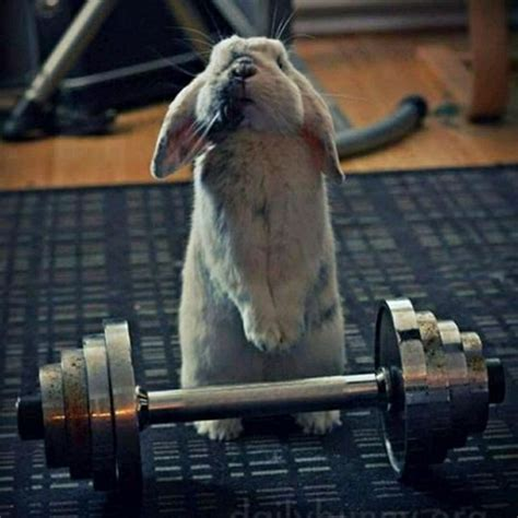Functional Animal *Wolverine* April Drill - Member Workout