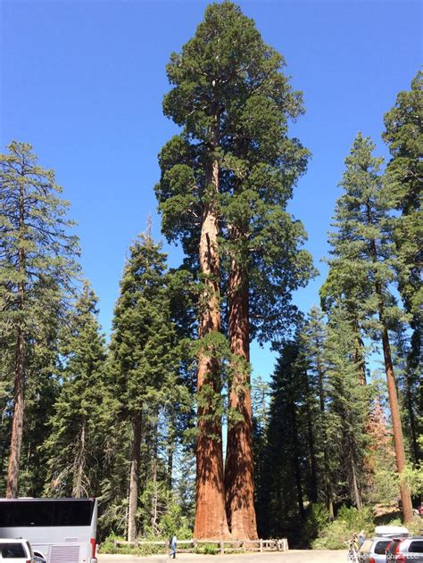 Sequoia and Kings Canyon National Parks ,Three Rivers