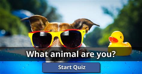 What Animal Are You? | Lusorlab Quizzes
